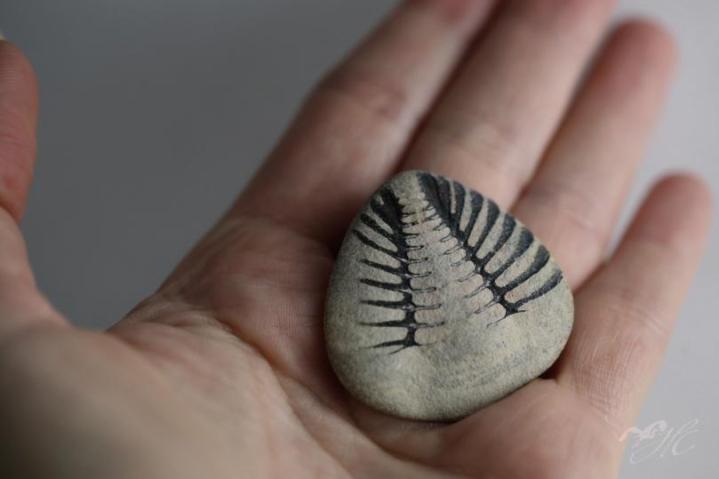IMG_1032_trilobite_fossile